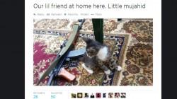 Un chaton à côté d'un fusil AK-47: les deux versants de la propagande de Daech