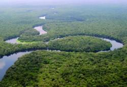 Avec une superficie de deux millions de km2, la forêt du bassin du Congo est le deuxième plus grande forêt tropicale derrière l'Amazonie.