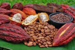 La Côte d'Ivoire est le premier producteur de cacao au monde avec 35% de parts de marché