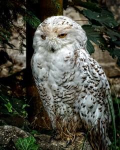 La chouette des constructivistes est aussi l'oiseau de Minerve, un animal nocturne symbole de la pensée stratégique