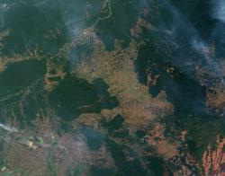 Photo aérienne de la forêt amazonienne