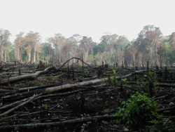 En Amazonie, la déforestation se poursuit.