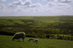 Le Brexit et l'agriculture britannique